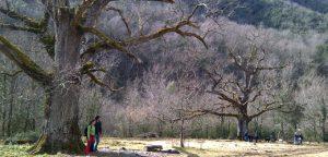 Roures del Rei a la vall d'Hortmoier, Montagut i Oix