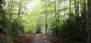 Camí sobre les Olletes, Vall d'en Bas