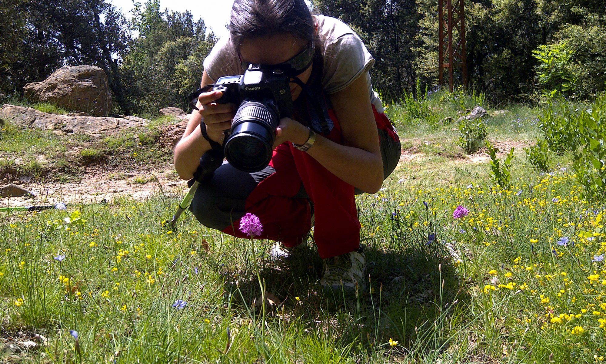 Orquídia silvestre, Vall de Bianya